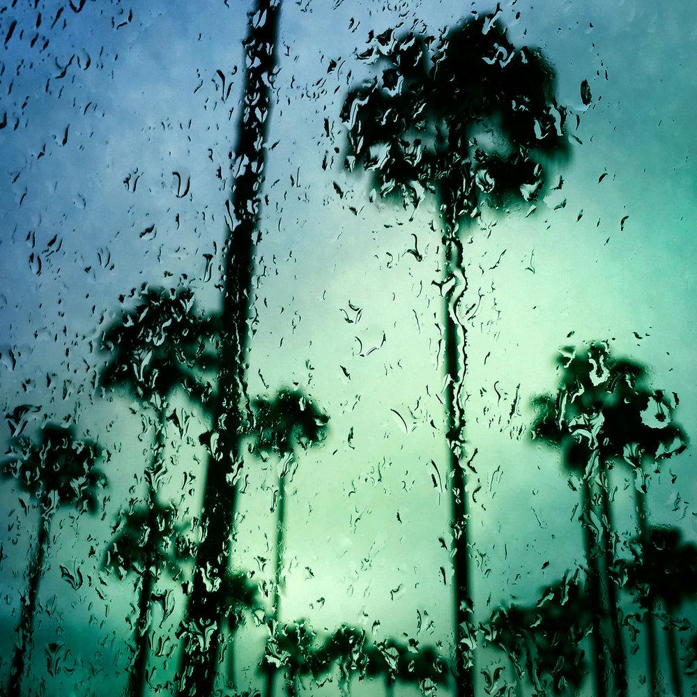 Palm+Trees+3,+Sarasota